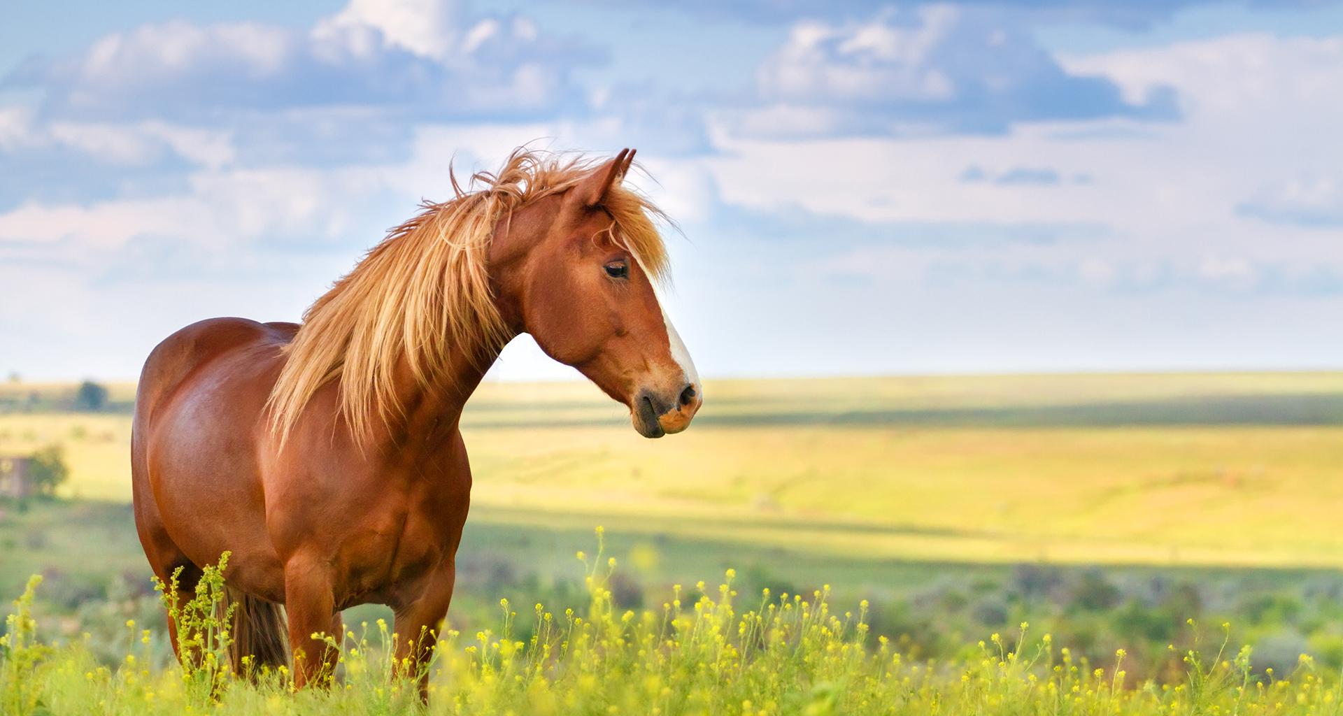 riskli till häst